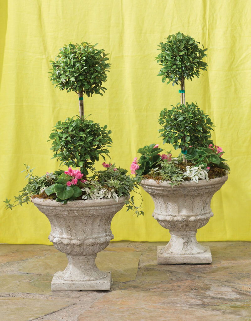 Two topiaries