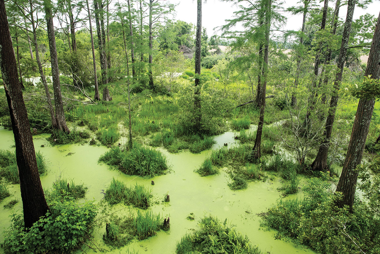 aerial view of Alligator Alley