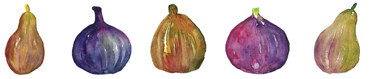 illustration of fresh fig varieties