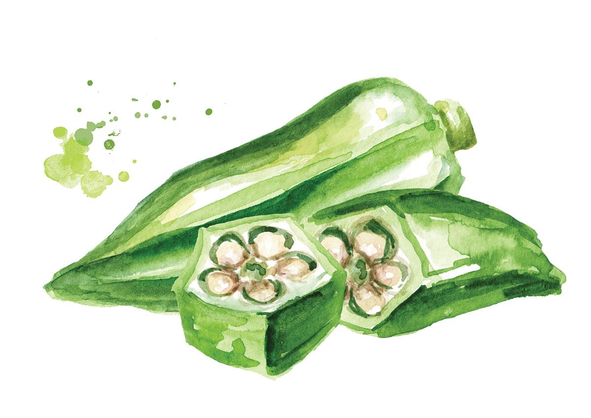 illustration of pickled okra